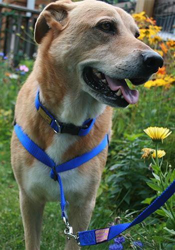 The Sportso Doggo Collar
